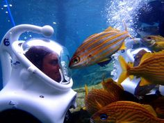 SeaVenture offers guests the opportunity to come face to face, literally, with the colorful and tropical fish at Discovery Cove. Take a look at this guest getting up close and personal with a curious fish in this fan photo!