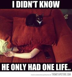 The trouble with inferior lifeforms   #cats #humor
