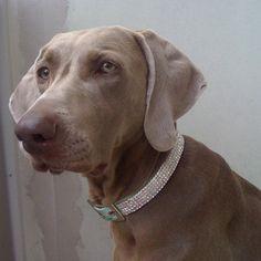 Diamond with her diamond collar