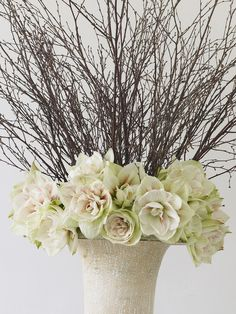 Stunning Winter White Amaryllis in Urn