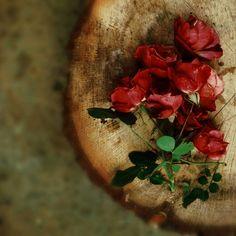 #photography #rose #vintage #wood #emofofashion #emofopatsii #barunsobti Vintage Wood, Photo Ideas, Nature Photography, Rose, Painting, Art, Shots Ideas, Art Background, Antique Wood