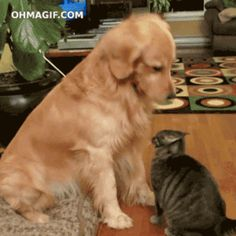 """""""Good, so good, yes, you cooked an amazing dinner, thank you, yes, so very good job."""" 