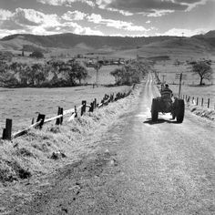 South Coast country, dirt roads, farms, tractor. Max Dupain photo, 1959.