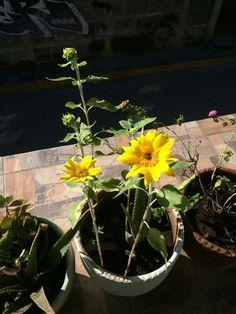 Plantas de jardín. Terraza #terrazas #jardin
