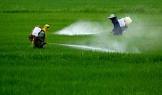 Attualià: #Salute: #studio #rivela legame tra pesticidi e autismo (link: http://ift.tt/2n24J8R )