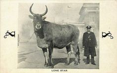 1933 Worlds largest cow,,,World's Fair in Chicago
