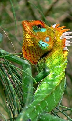 √ 5 Different Types of Chameleons - cards -You can find Chameleons and more on our website.√ 5 Different Types of Chameleons - cards - Nature Animals, Animals And Pets, Funny Animals, Cute Animals, Reptiles Et Amphibiens, Cute Reptiles, Beautiful Creatures, Animals Beautiful, Beautiful Beautiful