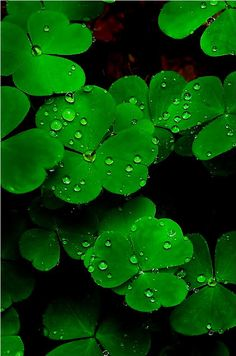 clover, I love the color green Green Life, Go Green, Green Colors, Fotografia Macro, World Of Color, Amazing Nature, Belle Photo, Shades Of Green, My Favorite Color
