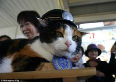Super Station Master Tama of the Wakayama Electric Railway in Japan Baby Cats, Cats And Kittens, Kitty Cats, Pet Sitters International, Munchkin Cat, Cat Hat, Crazy Cat Lady, I Love Cats, Funny Cats