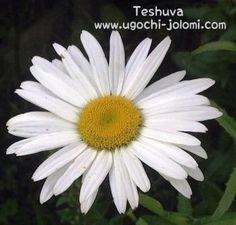 Teshuva: SINGLES' SATURDAY