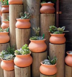 Interesting plant display using logs and clay pots