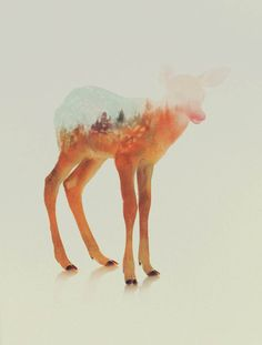 animal-kingdom-Andreas-Lie-14