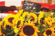 Sunflower Aix en Provence, France Aix En Provence, Provence France, Provence