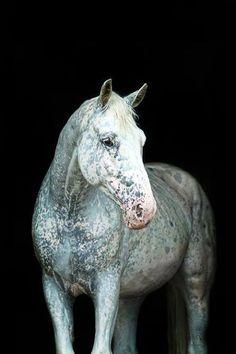 "beauxchevaux: "" o.O This horse looks like a marble. "" By  Katarzyna Okrzesik , I think"