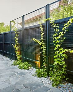 Great idea for garden screen