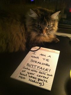 <b>Except that cats can never feel remorse.</b> Heartless beasts.