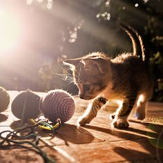 kitten  by Khatawut J, via 500px