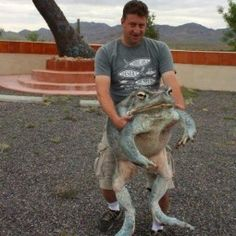 The largest frog in the world- I mean I'm not sure if this is real, but if it is... Oooh my...