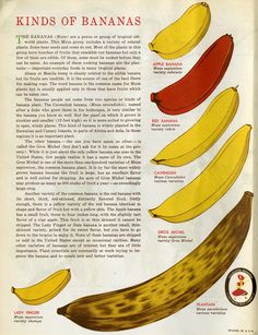 1950s promotional material for United Fruit Company