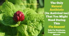Hydrastis also known as Goldenseal - The ONLY Natural Antibiotic That You Might Need During This Flu Season!