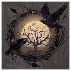 A couple of Ravens/crows in a tree nest framed moon