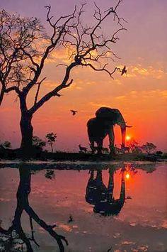 Animais e paisagens