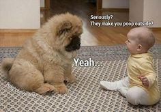 Baby and puppy, so funny! Omg chow chow!!!!!!!!