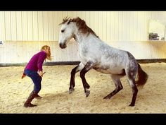 Freelance work with the horse: tips for fine communication! PLUS: exercise video Side walks with the Horse Riding Pants, Trail Riding Horses, Horse Riding Quotes, Horse Riding Tips, Riding Hats, Horse Quotes, Horse Tips, Horseback Riding Outfits, Horseback Riding Lessons