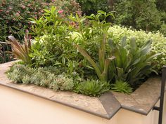 https://flic.kr/p/ebsZGu   6-7-2009. Planter at mid-level terrace