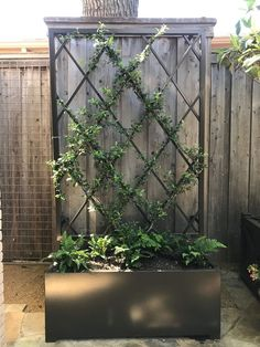 I like the mix of modern and classic approach to a vine trellis. I like the mix of modern and classic approach to a vine trellis. Though historical with concept, a pergola may be encountering a modern-day renaissance all these days. Pergola With Roof, Cheap Pergola, Pergola Plans, Pergola Ideas, Pergola Kits, Vine Trellis, Garden Trellis, Metal Trellis, Trellis Ideas