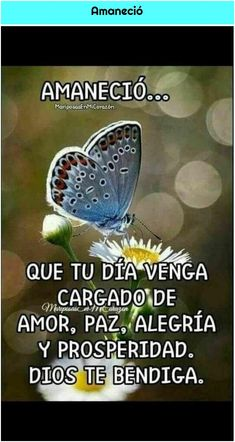 Cute Good Morning Quotes, Good Morning Inspiration, Good Day Quotes, Good Morning Messages, Daily Quotes, Positive Phrases, Motivational Phrases, Inspirational Quotes, Good Morning In Spanish