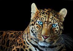 heather-lara-painting-animal-portrait-realistic-beautiful