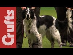 Rescue Dog Agility - Highlights - Crufts 2012......to do agility with a rescue dog, to work past fears and create a bond with that rescue dog is incredibly challenging.  Way to go rescues and their handlers!!!!