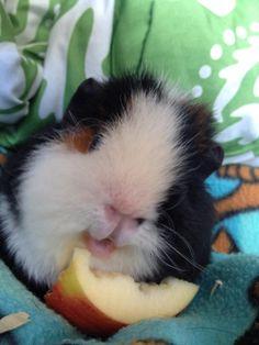 happy apple eating