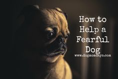 How to help a fearful dog.