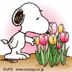 snoopy spring flowers - Norton Safe Search