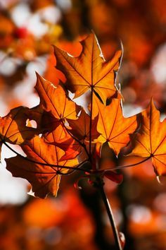 Orange and Brown Leaf