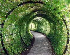 Ivy Tunnel - Wouldn't a version of this be great in a Steampunk garden?l