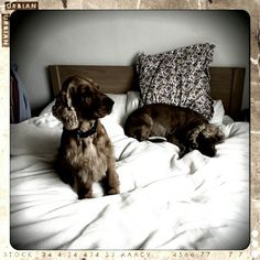 Tilly and taz Dogs, Animals, Animales, Animaux, Pet Dogs, Doggies, Animal, Animais