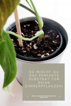 All Plants, Celery, Herbs, Vegetables, Pots, Diy, Garden Centre, Indoor House Plants, Love