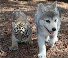 cute babies..