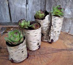 birch planters
