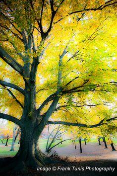 Franklin & Marshall Tree franktunisphoto-2767