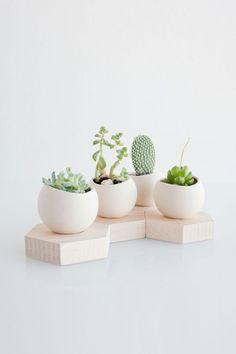 Zimmerpflanzen Bilder Sukkulenten in eleganten Holzkübeln