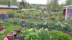 Mau 2015 Garden Cottage, Colonial, Mom, Plants, Plant, Mothers, Planets