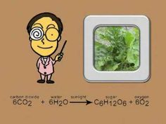 Photosynthesis song for science. My son learned it in K and he still remembers this process