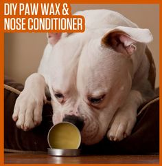 DIY Paw Wax & Snout Care For Dogs  Paw wax is also great protection against gravel and other abrasive surfaces, and can help give your dog some grip to stop him from sliding all over the wood floors in your home! This DIY paw wax recipe is a quick and easy solution to paw pad protection, and should be applied liberally, as needed for prevention or treatment of dry and cracked paw pads. See more: http://gooddogsco.com/2015/01/diy-paw-wax-snout-soother-dogs/