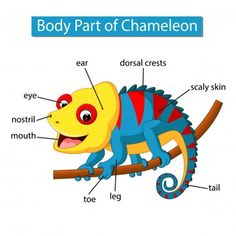 Diagram showing body part chameleon Royalty Free Vector Learning English For Kids, Teaching English Grammar, English Lessons For Kids, English Language Learning, English Vocabulary, Kids Learning, Animals Name In English, Ingles Kids, Zoo Activities