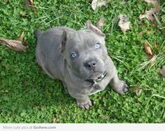 Blue eyed CC