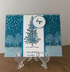 Blue Spruce?